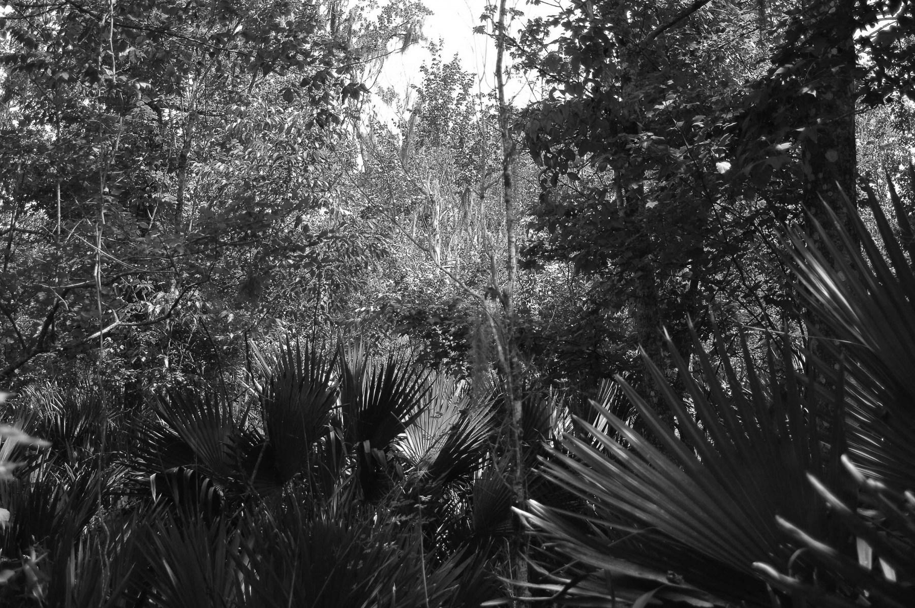 Landscape-1-2008-2020-16